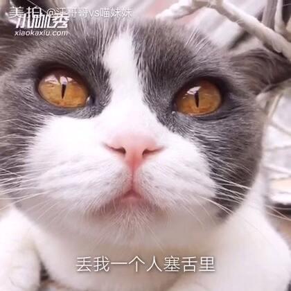 蓝瘦😣香茹🍄本来今天高高兴兴的~谁料大黑哥又偷吃了我的麻辣小鱼干🐟本宝宝生气😒不开心…就是不开心…😔😔😔#宠物##蓝瘦香菇#