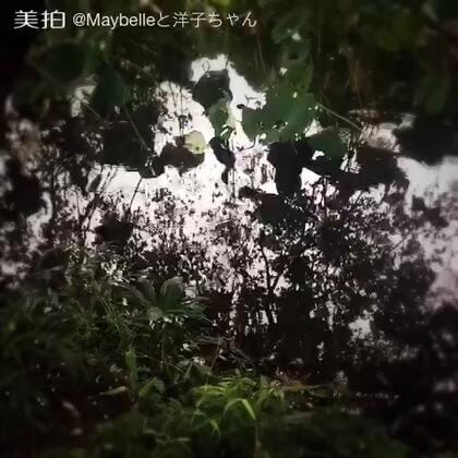 雨滴轻落玄武湖,鸟儿蛐蛐掀涟漪