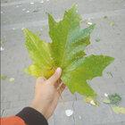 #秋天来了#❤