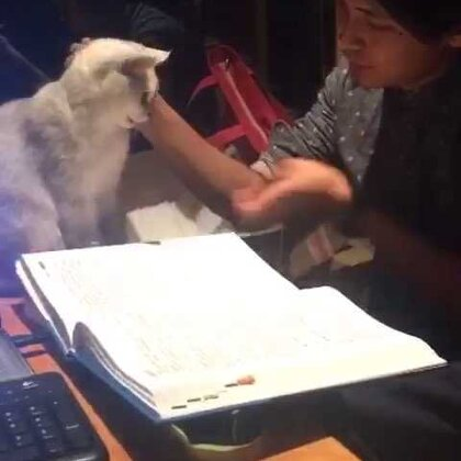 #随手美拍##小馋猫##直播学习##萌宠##萌宠乐园##喵星人#一饼陪张医生一起看小动物的书,看看就烦了,抛下桌,只剩下我俩在学习。人不如猫系列。