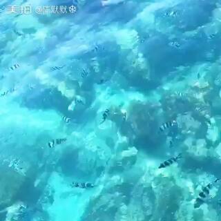 #澳大利亚大堡礁# 澳大利亚 大堡礁。超美🎏🎏