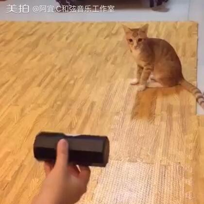 没事不要拿沙锤吓猫 #音乐#
