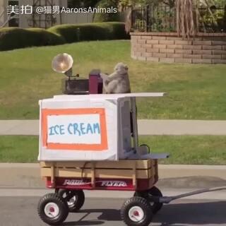 卖冰淇淋咯🤗#我要上热门##家有萌宠#