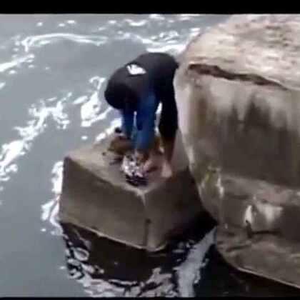 一只流浪狗落水被人救起后,狗狗疯狂感谢