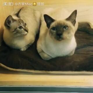 #随手美拍##上海领养##聚会##5分钟美拍#本周六,日,到店成为门店会员就可以免费带小可爱回家哦
