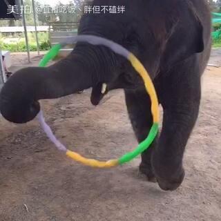 #泰国之旅#多才多艺的小象🐘#我要上热门##带着美拍去旅行#
