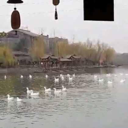 01-18 22:13转发的美拍视频