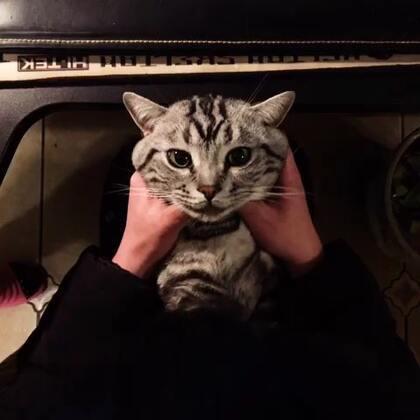 😌😌😌😌😌#宠物#@nG家的猫