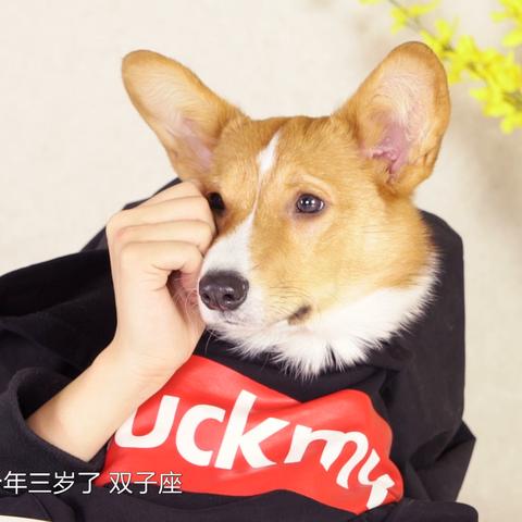 【小红唇官方美拍】Hello,这里有一只单身狗汪小旺...