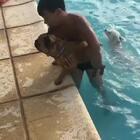 #宠物#人类已经无法阻止这只狗狗跳水了😆😂