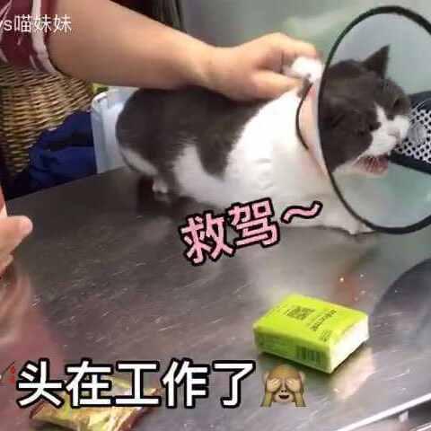 【汪哥哥vs喵妹妹美拍】喵妹打针💉记,全程凶悍到没朋友...