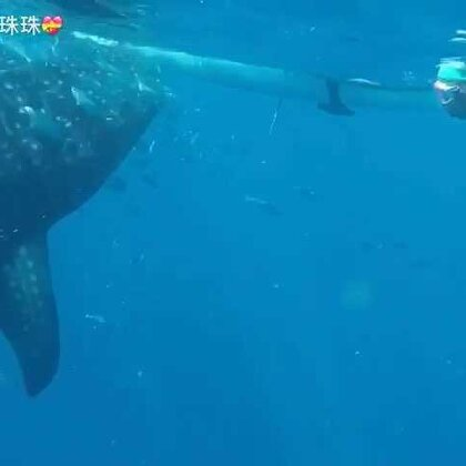 2016我与鲸鲨同游大海。#杜马盖地去oslob看鲸鲨#