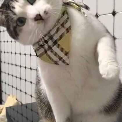 #宠物#会卖萌的小胖纸……#喵星人#