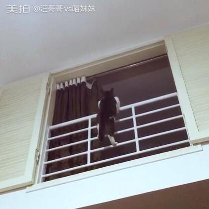 一言不合就爬楼😏不就是这两天忙不陪你疯吗🤓自己不也一样玩的嗨🤔(大家别担心,阁楼不高,下面就有猫爬架,所以不必担心会掉下来😁)#宠物##捣蛋喵星人#