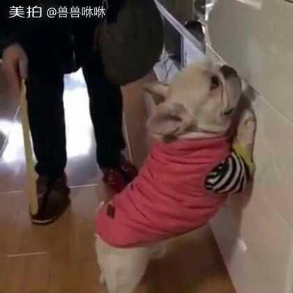 #萌宠#😂😂狗狗做错事被罚,好可爱啊(视频出处:转自微信)