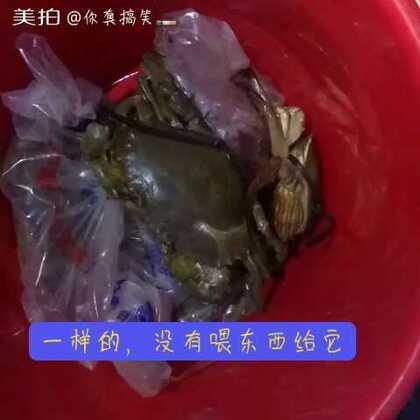 哈哈开心活抓青蟹#吃秀##5分钟美拍##随手美拍#