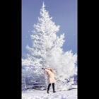 #下雪啦❄❄##大兴安岭##随手美拍#冻僵了。不过很美