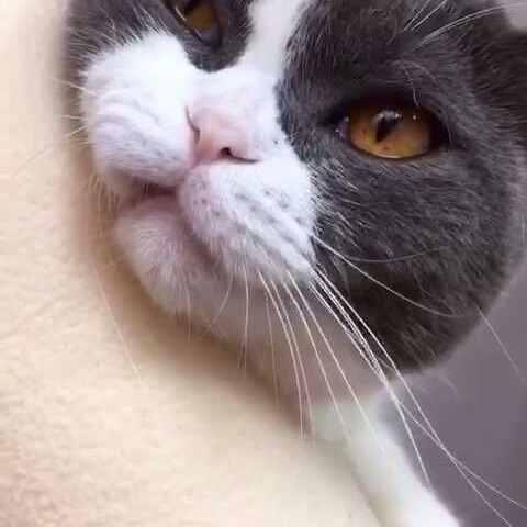 """【汪哥哥vs喵妹妹美拍】😝互动小游戏""""猫爪必须在上""""其..."""