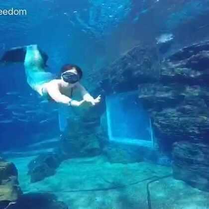 2016特缔思潜水年度视频汇总!累积一年的精彩原创水下短片,总有一款你喜欢的^_^,在这,给广大朋友们呈现另一个精彩的世界,2017,我们会继续努力,把最美的视频献给大家!欢迎大家关注!#潜水##自由潜水##美人鱼##原创水下短片#