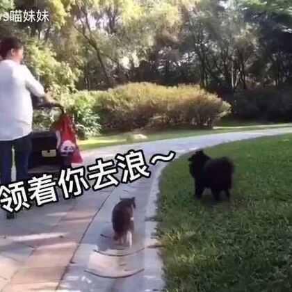 🐱🐶领着我们逛公园😎中间发生了什么笑点👉戳视频#宠物##黑仔BB##宠物内心小剧场#