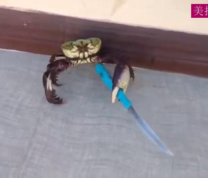 螃蟹从厨房逃走,手上还拿了把刀,不是不让成精吗哈哈哈!😂