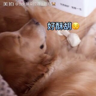 枕着媳妇屁股睡觉睡的心安理得🙈#朵拉和托尼##宠物#