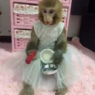 想嫁人了……#宠物##家有宠物#@美拍小助手