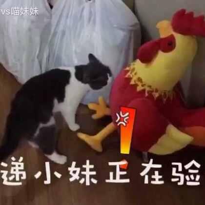 一只🐓引发的战争💪💪#宠物##宠物内心小剧场##喵妹嘻哈剧#
