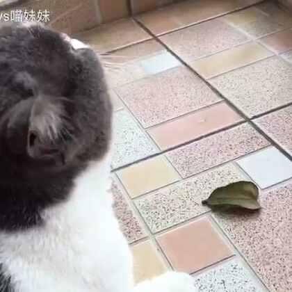 喵与叶的快乐时光😁😁#宠物##喵星人#
