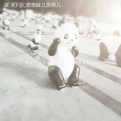@PANDAPIA 看熊猫@美拍小助手