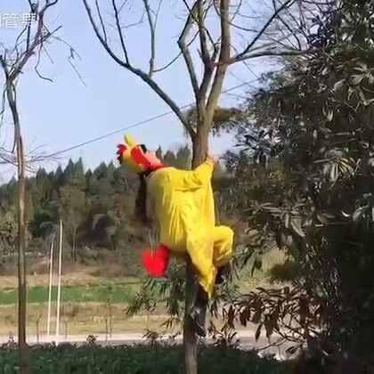 【小鸡小鸡钢管舞搞笑版】__如果你笑了别忘了赞一赞~#宠物##萌宠##舞蹈##搞笑#_宋瑶钢管舞学舞微信:wtbb1029 关注我的新浪微博:http://weibo.com/u/1600148720
