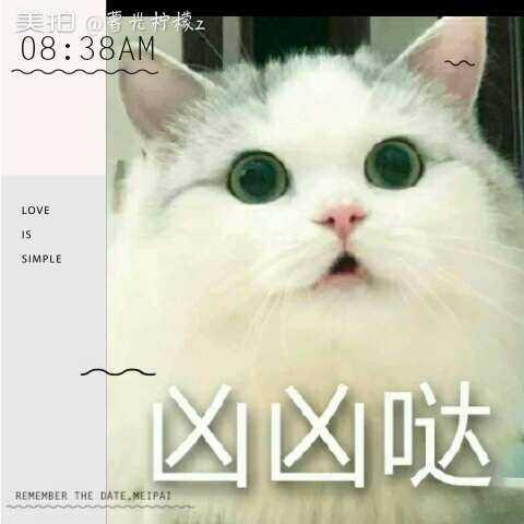 【顾闫然美拍】可爱的小猫咪~#新年快乐##美拍表.