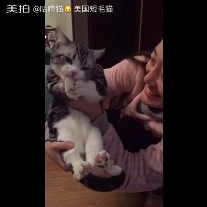 山西猫爱吃馍😂😂😂猫最好不要吃馒头等谷物,乃们看猫粮中无谷系列就懂了…其他喵子切勿模仿舒曼,其实他基本没吃进去😁😁😁#萌宠乐园##搞笑#