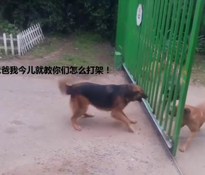 两伙聚斗的狗子,就这样被大门给化解了。。。