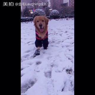 #宠物#帅宝宝来啦👻 拉宝微博👉https://weibo.com/u/2733474597