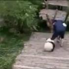 这是一个不屈不挠的抱大腿狂魔!饲养员小哥心很累