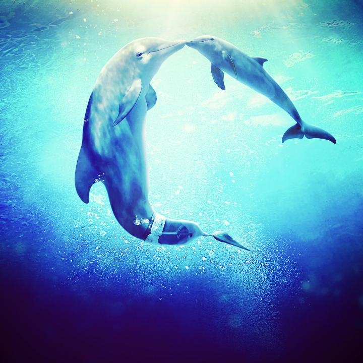 萌海豚动物图片