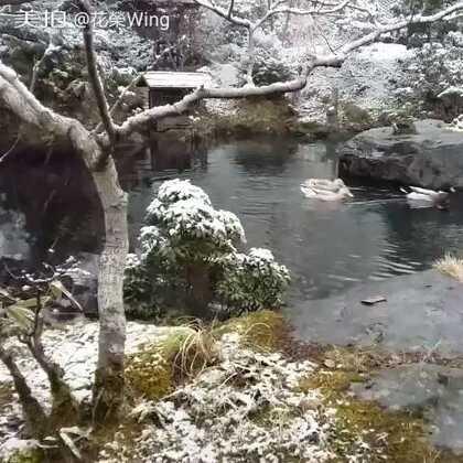 #随手美拍##爱生活爱旅游##美丽风景#日本阿蘇郡南小国町 温泉 落雪👣