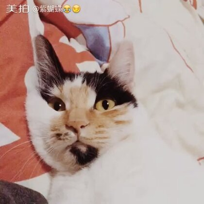 【扬哥小财神😂😏美拍】17-03-17 19:32