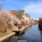 #北京##桃花##旅画映像#北京·桃花季