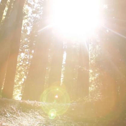 森林与能源
