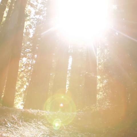 【联合国美拍】森林与能源