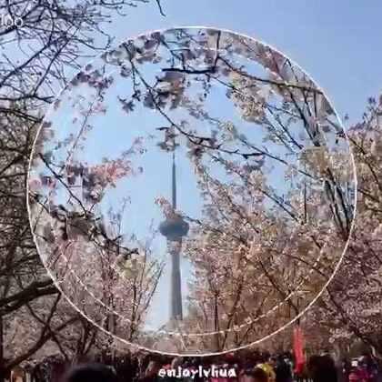 #旅行##樱花##玉渊潭#玉渊潭公园·樱花节