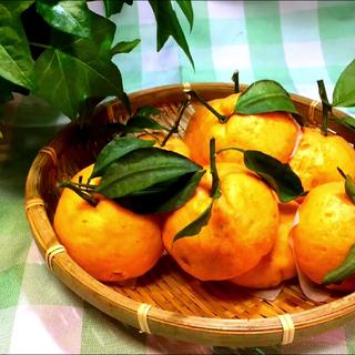 ✨橘子豆沙包✨这个豆沙包的外表有没有骗到你😏😏😏和面的时候不要加水,面粉的量要根据胡萝卜的出水度进行调整,视频后面的配方仅供参考😊#愚人节美食##美食##艾草厨房#