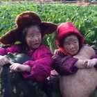 #宝宝##我要上热门##搞笑#我们绿色无污染的窝瓜大吗😄