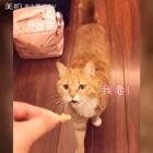 【愚人节】求之不得的猫饼干!我要这奴才有何用!提问:奴才不听话怎么办,在线等,挺急的……😂😂#搞笑宠物##云养猫##日常逗猫#
