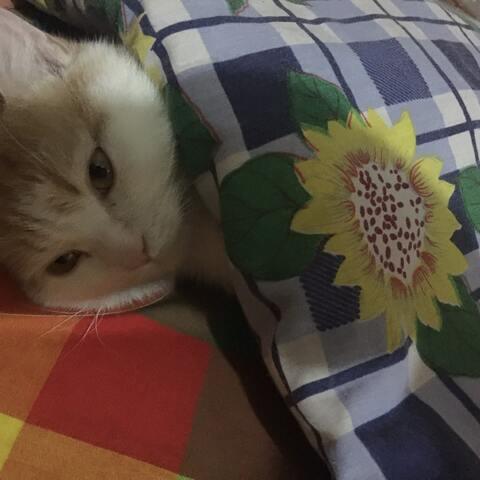 小猫咪盖着小花被觉觉