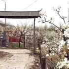 #春天##北京##旅画映像#十里梨花