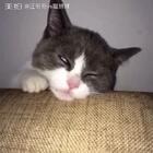 喵妹各种奇葩睡姿合集,喜欢的朋友转发评论点赞哦❤️#宠物##宠物奇葩睡姿##家有宠物爱翻白眼#
