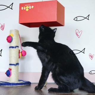 """#举起爪儿来#懒猫克星钓猫盒!这货让我对猫主子与纸盒间的羁绊有了新理解!#我要上热门##亲亲喵星人#更多内容欢迎大家关注我们的美拍账号""""罐头视频""""哦~☺"""